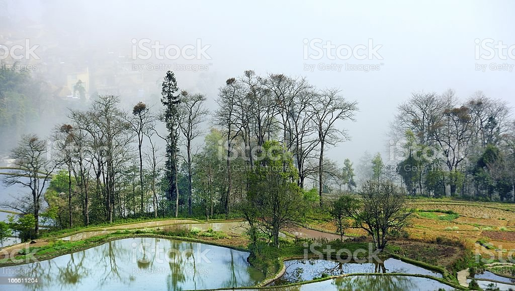 water in the terraced fields royalty-free stock photo