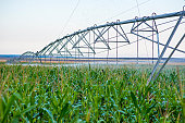 Agricultural irrigation system watering corn field