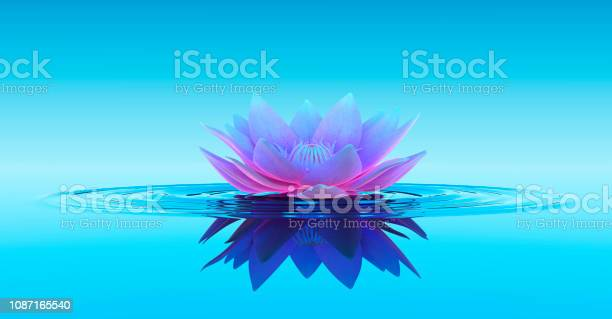 Photo of Water Lily Abstract Fantasy Background