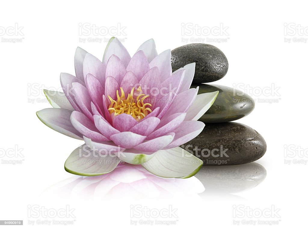 Water lily and pebbles stack stock photo