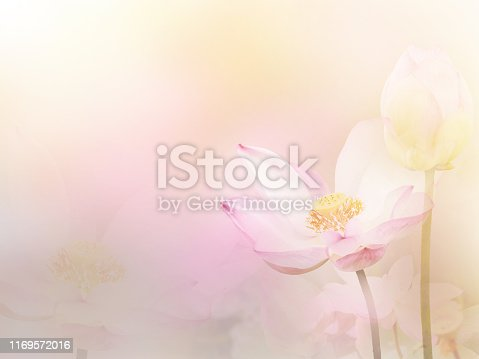istock water lily background 1169572016