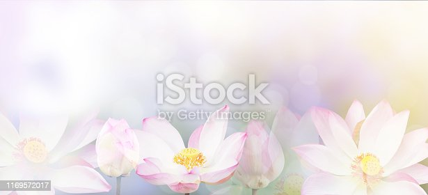 istock water lily background 1169572017