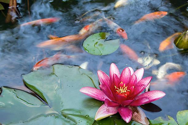 Japanese Garden Pond Design