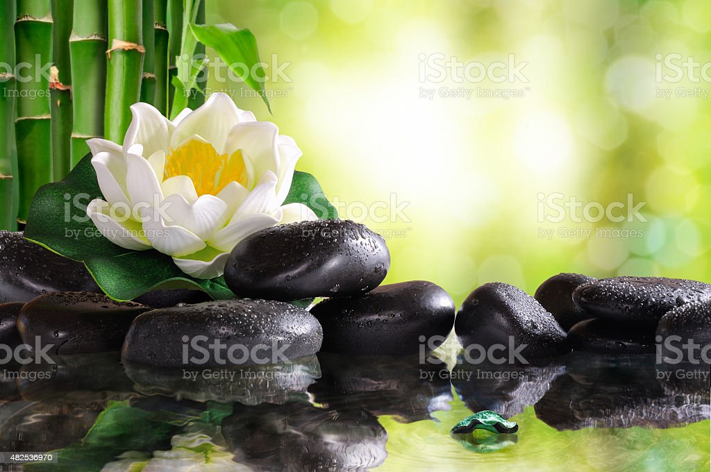 Water lily on lots of black stones reflected in water stock photo