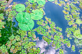 istock Water lily (Lotus) 1257184241