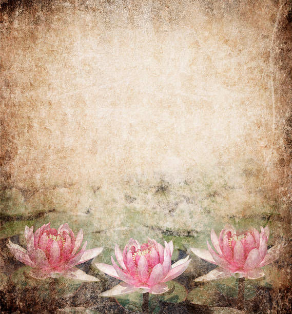 water seerose - lotus zeichnung stock-fotos und bilder
