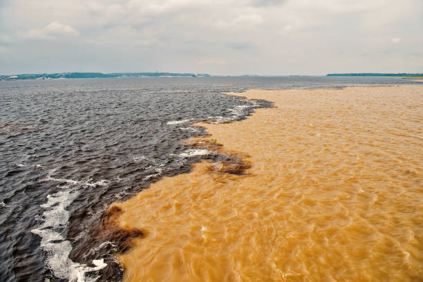 water meeting in brazil -amazon river with rio del negro stock photo