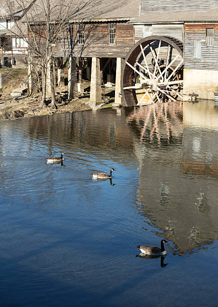 water mill with canada geese Calm water around a water wheel in pigeon forge tennsesse pigeon forge stock pictures, royalty-free photos & images