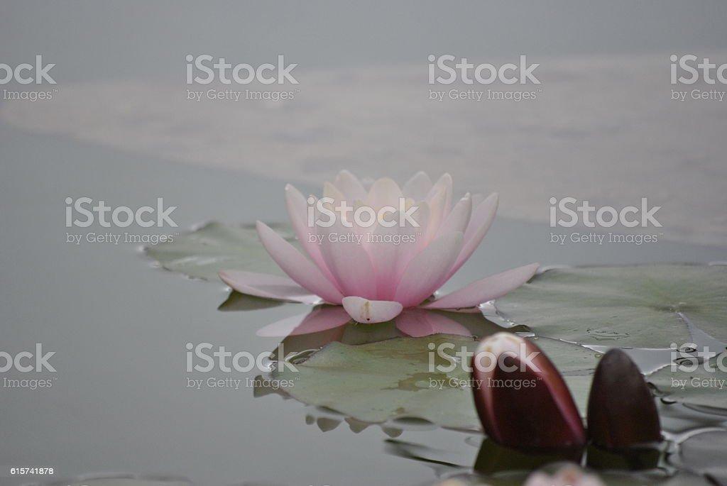 water nifea stock photo
