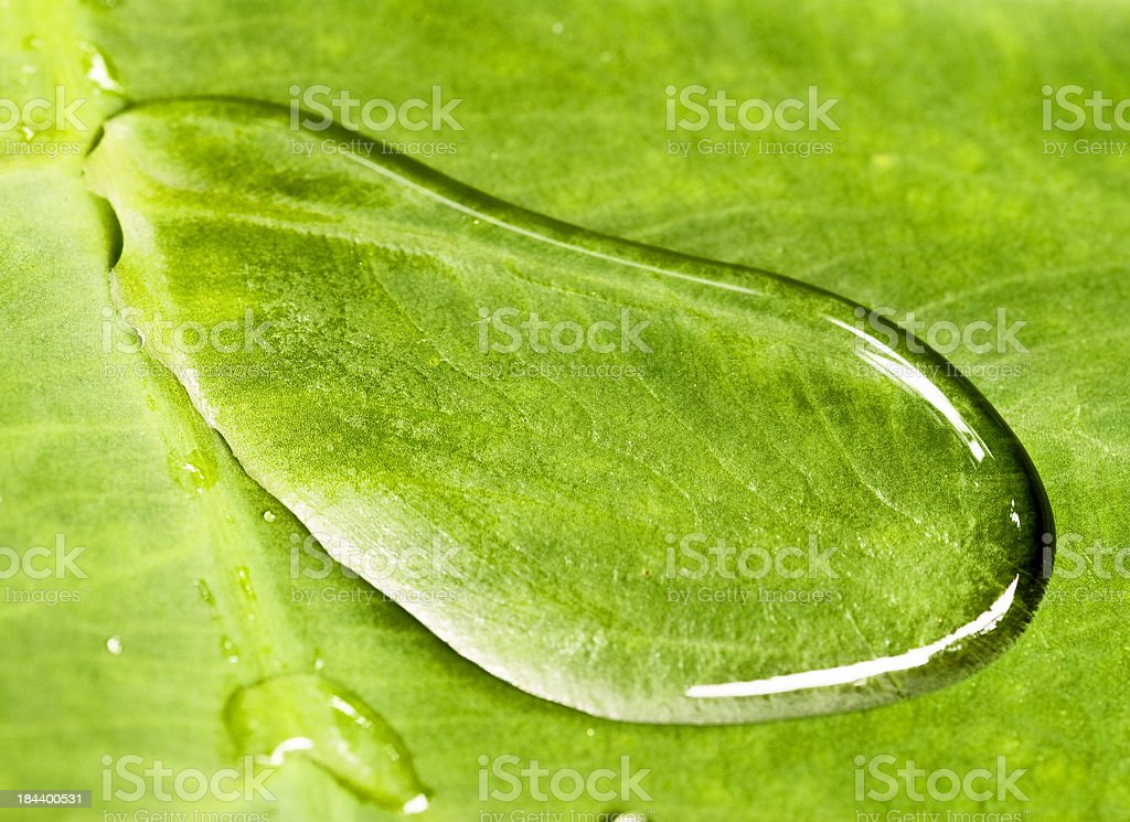 Water on a leaf stock photo
