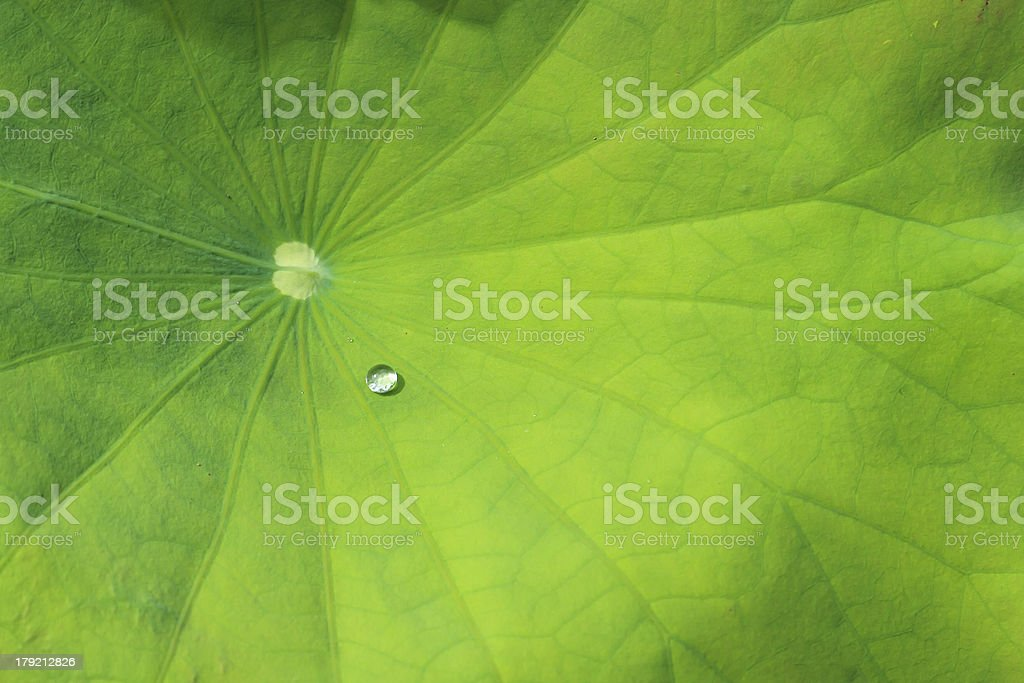 water on leaf royalty-free stock photo