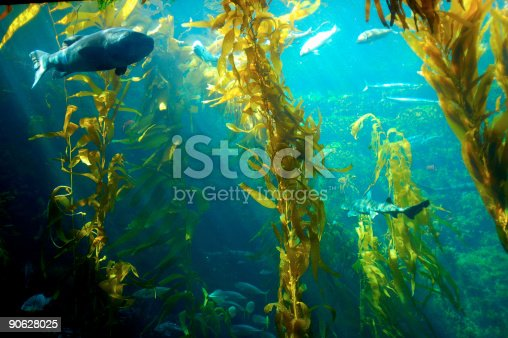 istock Water plants inside an aquarium with fishes 90628025