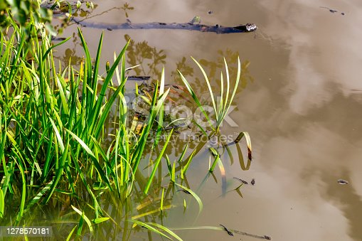 Water Plants, Eastbourne, UK