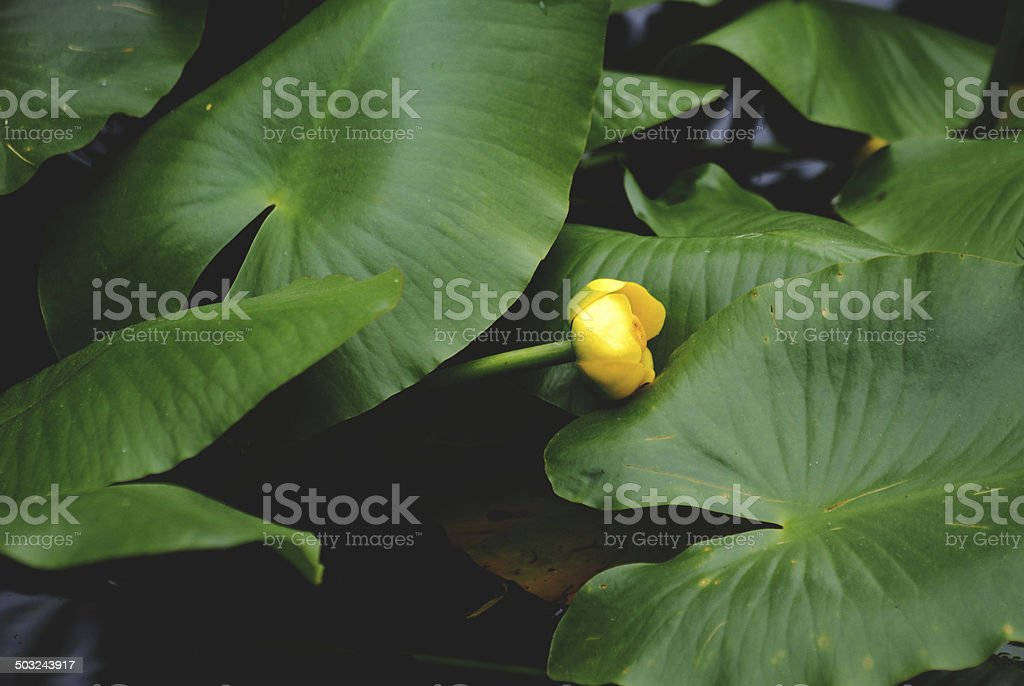 Water plants stock photo