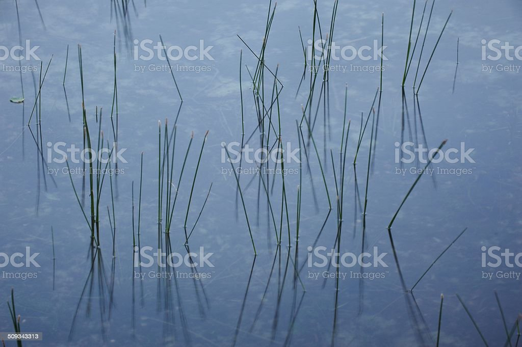 water plants royalty-free stock photo