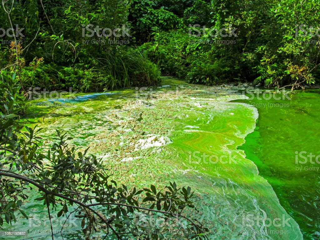 Water pollution by blooming blue-green algae (cyanobacteria) is world environmental problem. stock photo