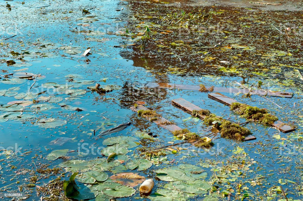 garbage in the nature, pollution of the environment, water pollution
