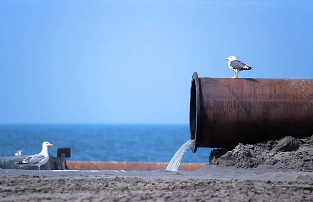 poluição de água - desperdício alimentar imagens e fotografias de stock