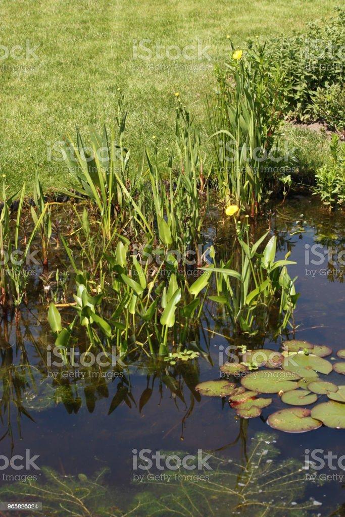 Water vijver met waterplanten - Royalty-free Achtergrond - Thema Stockfoto