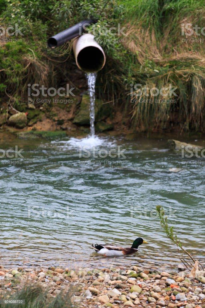 Fotografía de Agua De Una Tubería De Desagüe Que Vierte Al Río Con ...