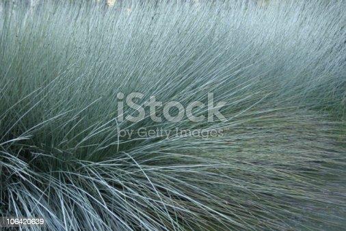Water Reeds close-up, Ewen Maddock Dam, S.E. Queensland Australia