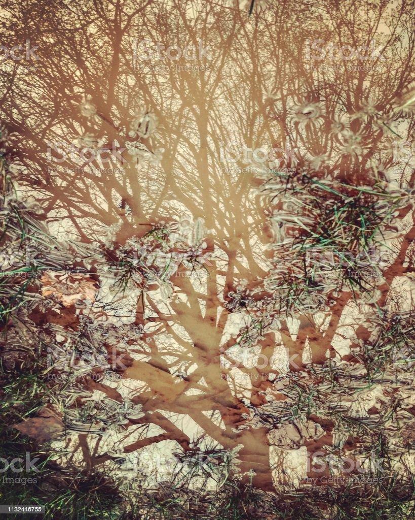 Wasserreflektion des Baumes – Foto