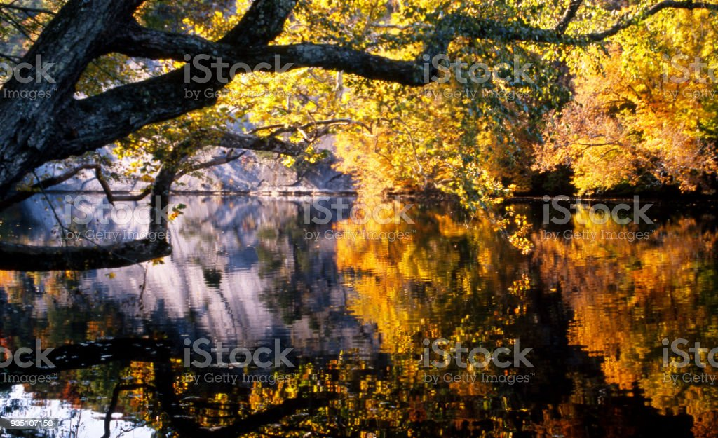 Water reflections in a dark river during fall season. stock photo