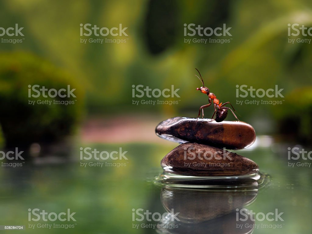 Water, rocks and ant stock photo
