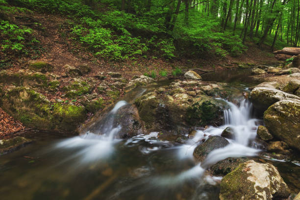 Water rolling down the rocks in shallow forest river photographed using long exposure stock photo