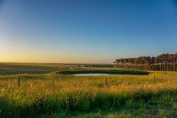 wasser sicher im outback von australien - revierverhalten stock-fotos und bilder