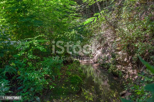 water spring flowing in the summer forest