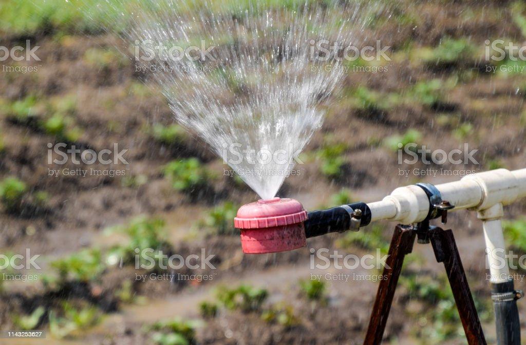 Water sprinkler for watering in the garden. Watering in the garden.