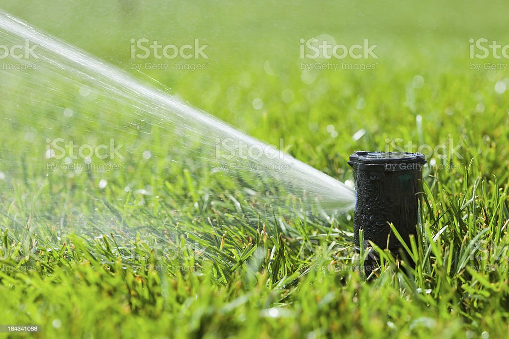 Water Sprinkler Head Spraying New Grass royalty-free stock photo