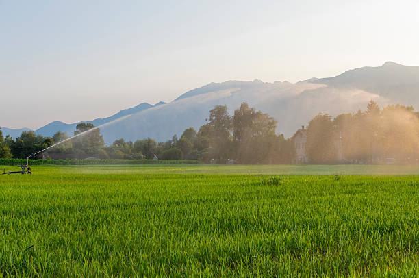 Water sprinklers stock photo