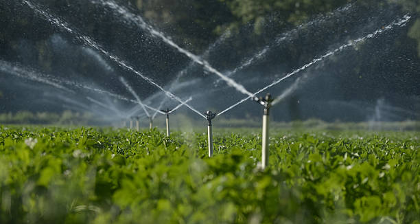 water sprinklers Water sprinklers irrigating a field. irrigation equipment stock pictures, royalty-free photos & images