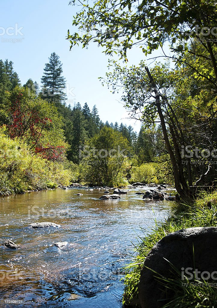 Water Stream, Forest River royalty-free stock photo