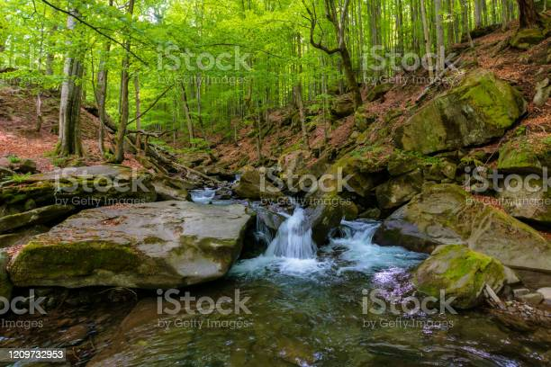 Photo of water stream in the beech forest