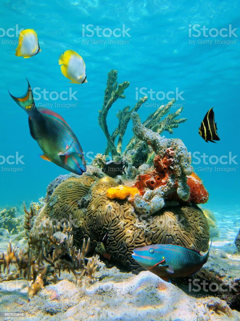 Water surface and marine life stock photo