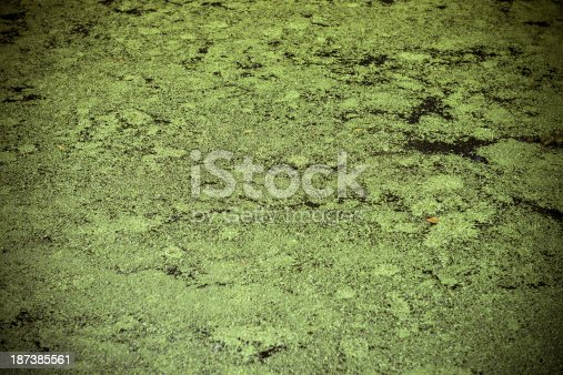 Water surface covered with natural things