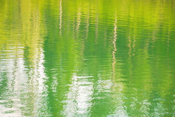 wasseroberfläche, wo die natur reflektiert wird. - monet bilder stock-fotos und bilder