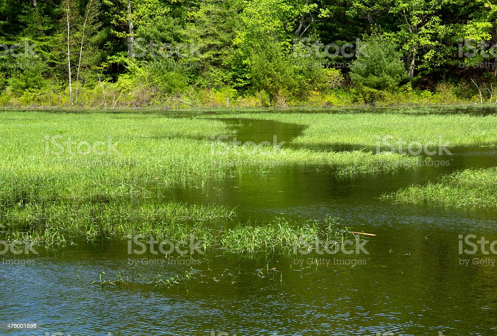 Water trail in marsh grasses with woods in Hebron, Connecticut. stock photo