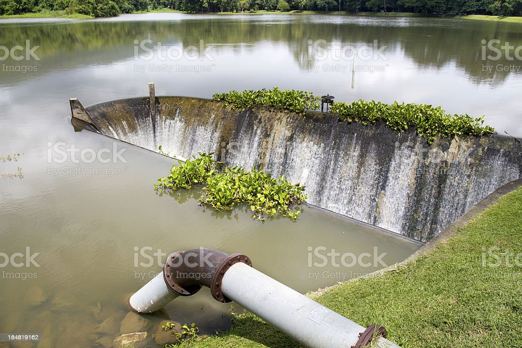 Water weed on spillway royalty-free stock photo