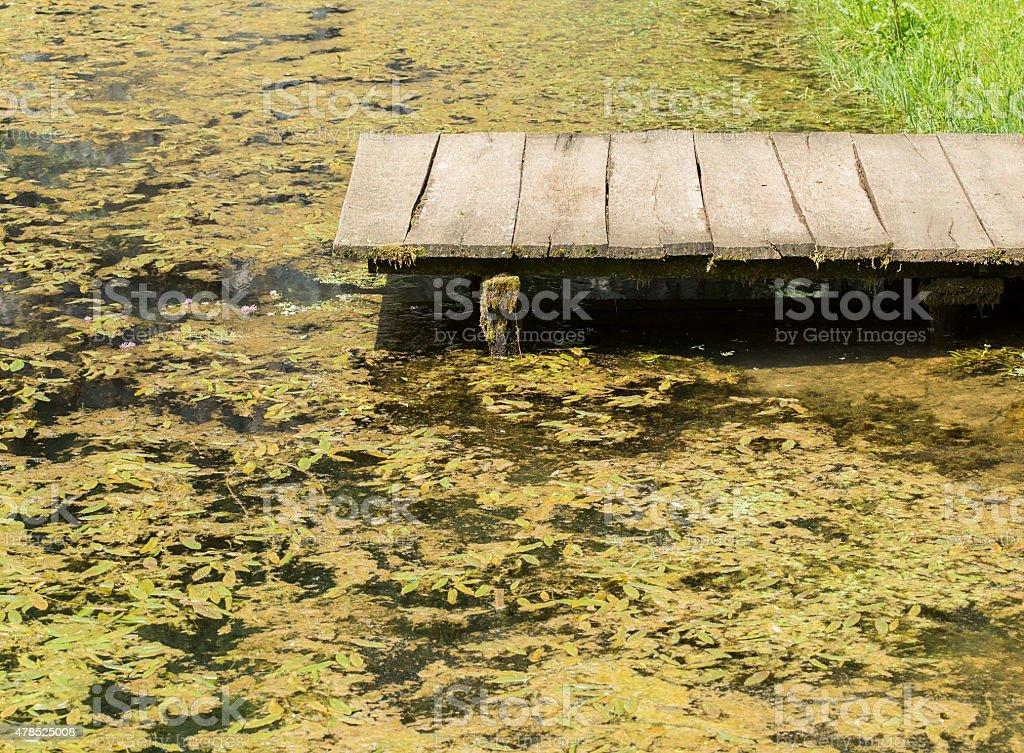 Water with algae stock photo