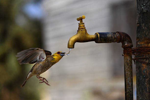 Waterbird stock photo