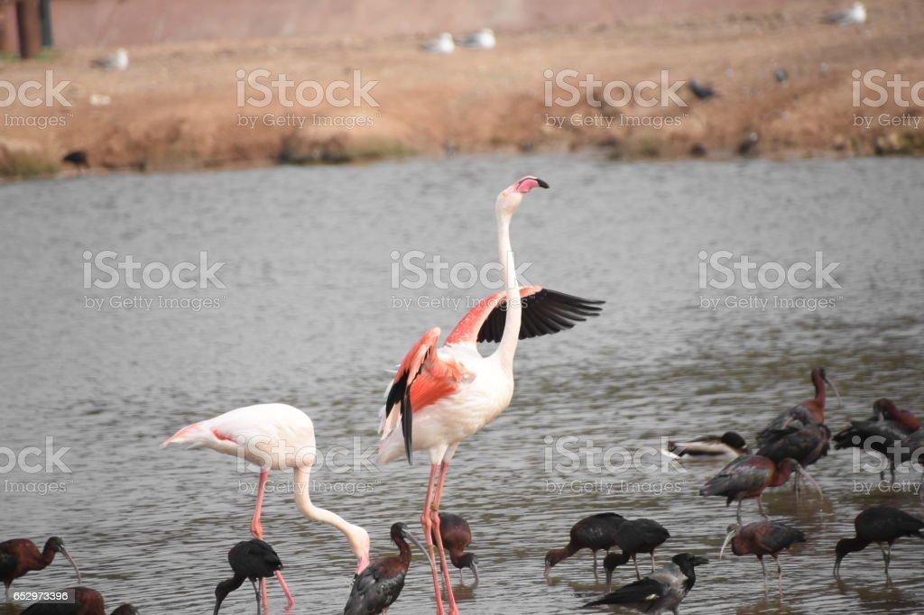 Waterbirds in a lake , Ramat Gan, Israel stock photo