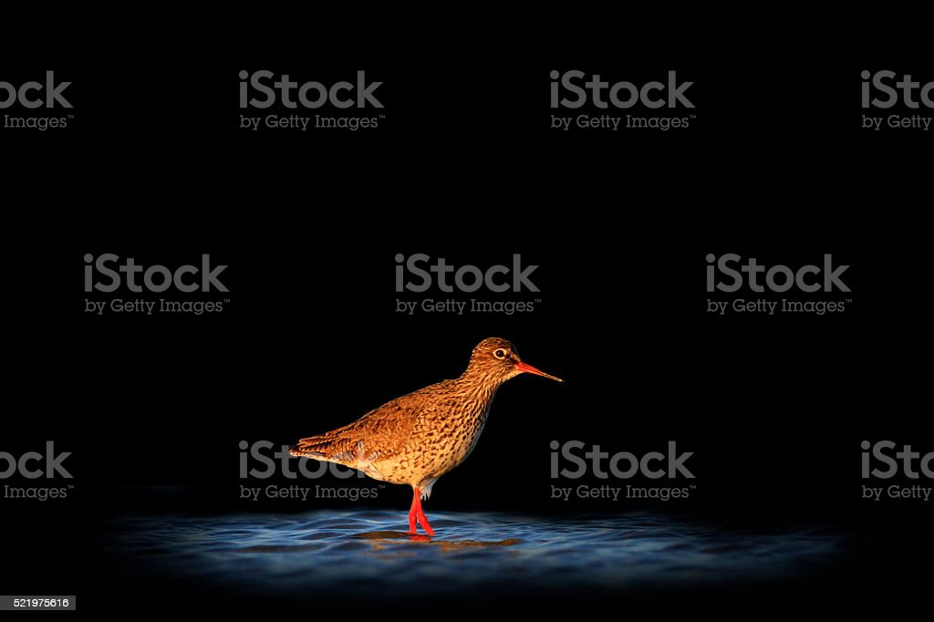 waterbirds isolated on black blurred background stock photo