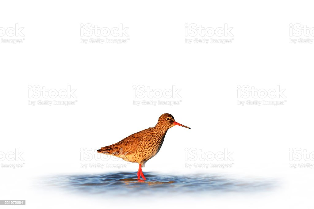 waterbirds isolated on white blurred background stock photo