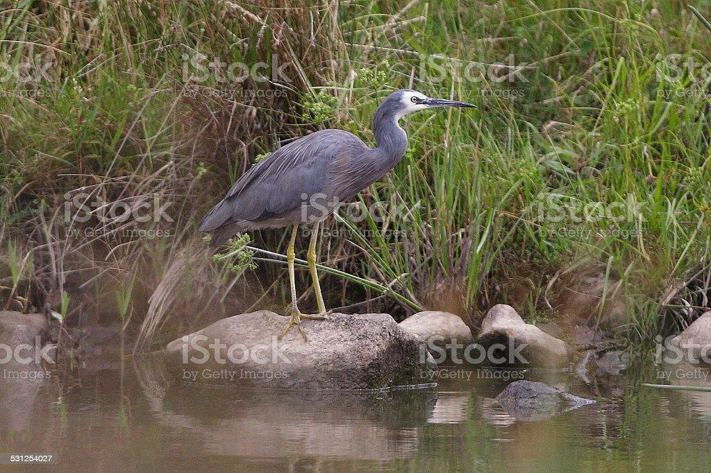 waterbirds stock photo