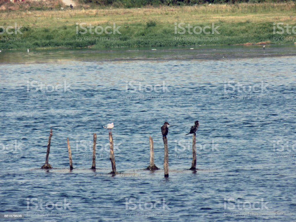 Waterbirds stands on the pole in the middle of the river stock photo