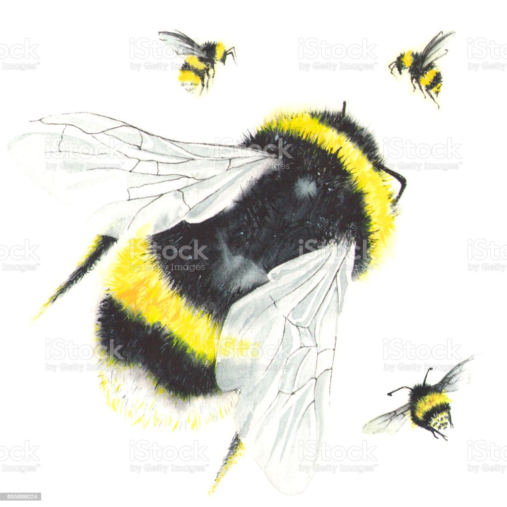 Watercolor bees isolated on white. stock photo